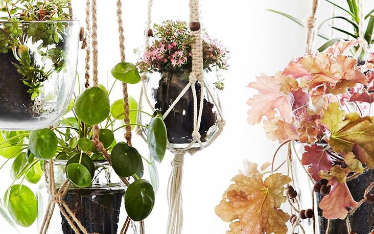 Varieren met de planten zelf!
