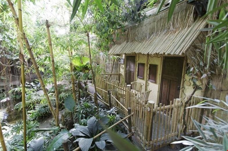 De jungle van Sumatra in ons kikkerlandje
