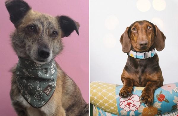 Bella Barkeley kleurt de identiteit van jouw hond