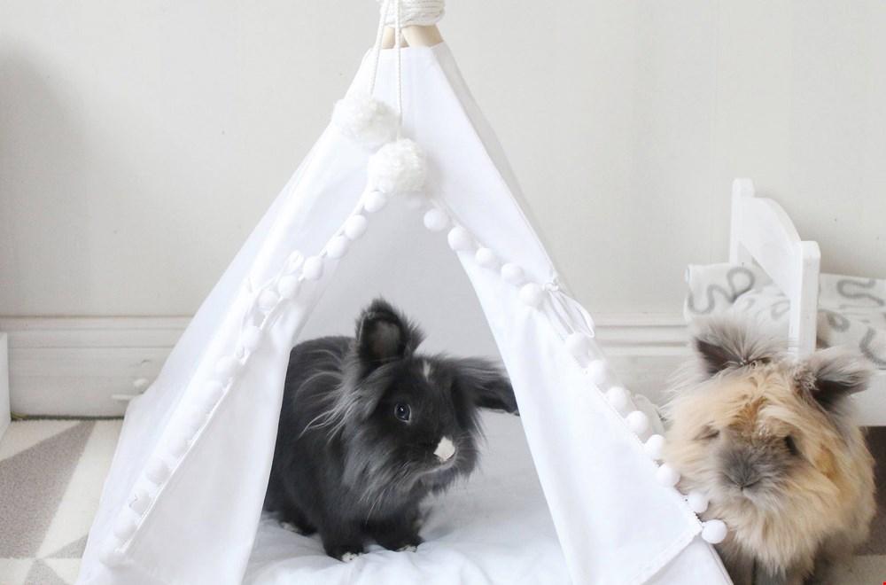 Werelddierendag: de leukste musthaves voor jouw huisdier!