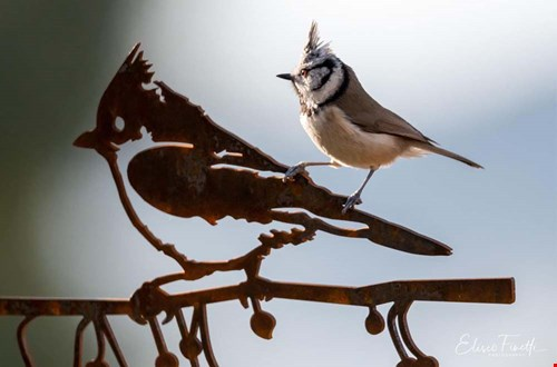 Metalbird ziet ze vliegen