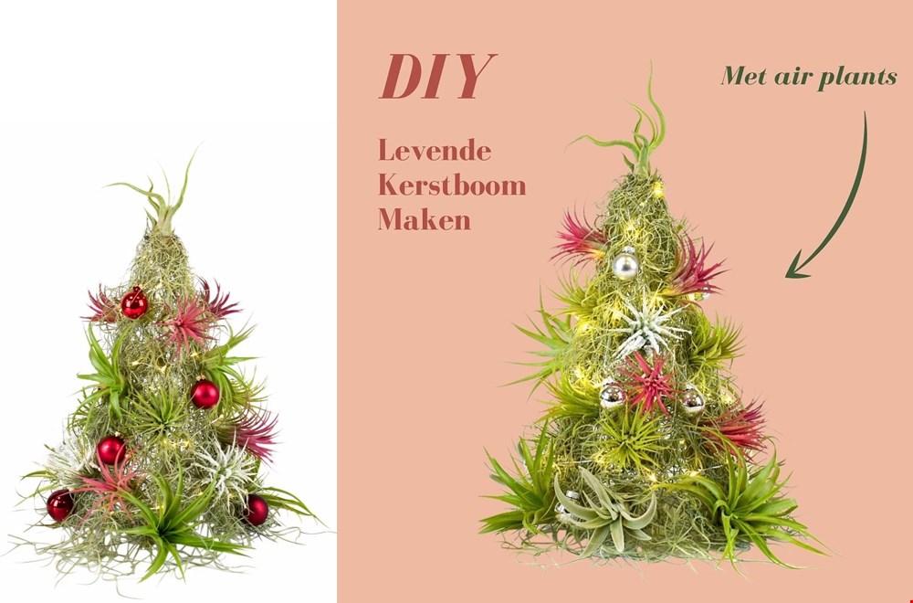 Maak je eigen levende kerstboom van luchtplantjes