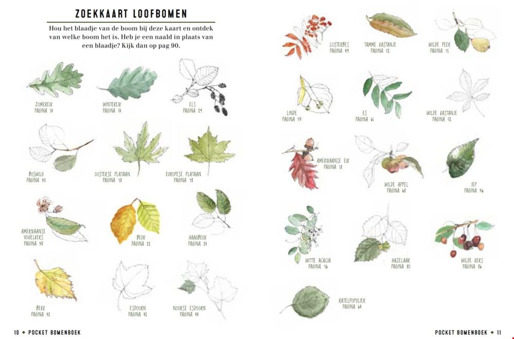 Slide uit het prachtige pocket Bomenboek van Snor!