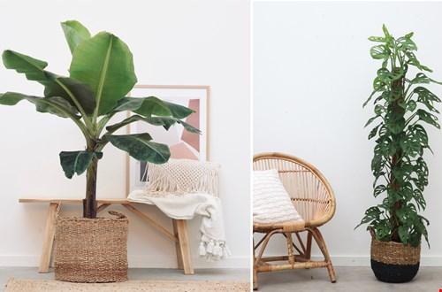 We love plants! En jij?
