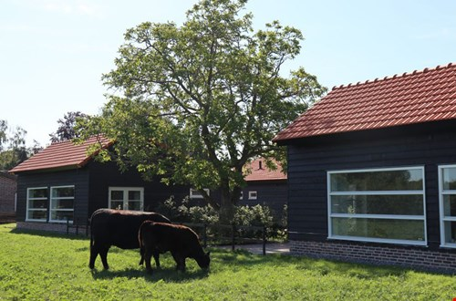Met de kippen op stok in Limburg