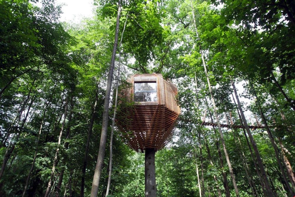 Hoog in de bomen, tiny tree house ORIGIN