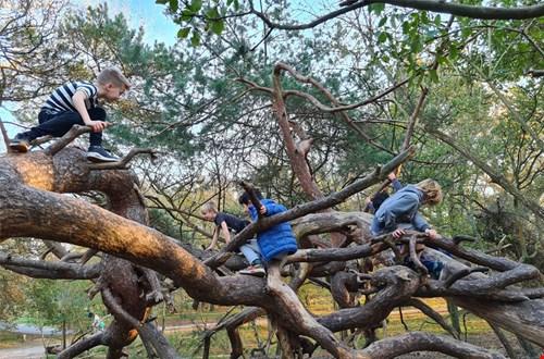 Klimmen, klauteren en slingeren in het Monkeybos in Meijendel
