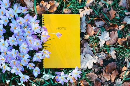 MOYU Notebooks Notitieboek geel Flavourites