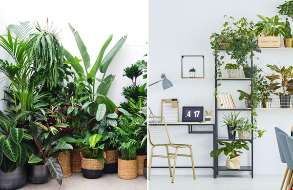 Jungle van kamerplanten, dé trend van 2021