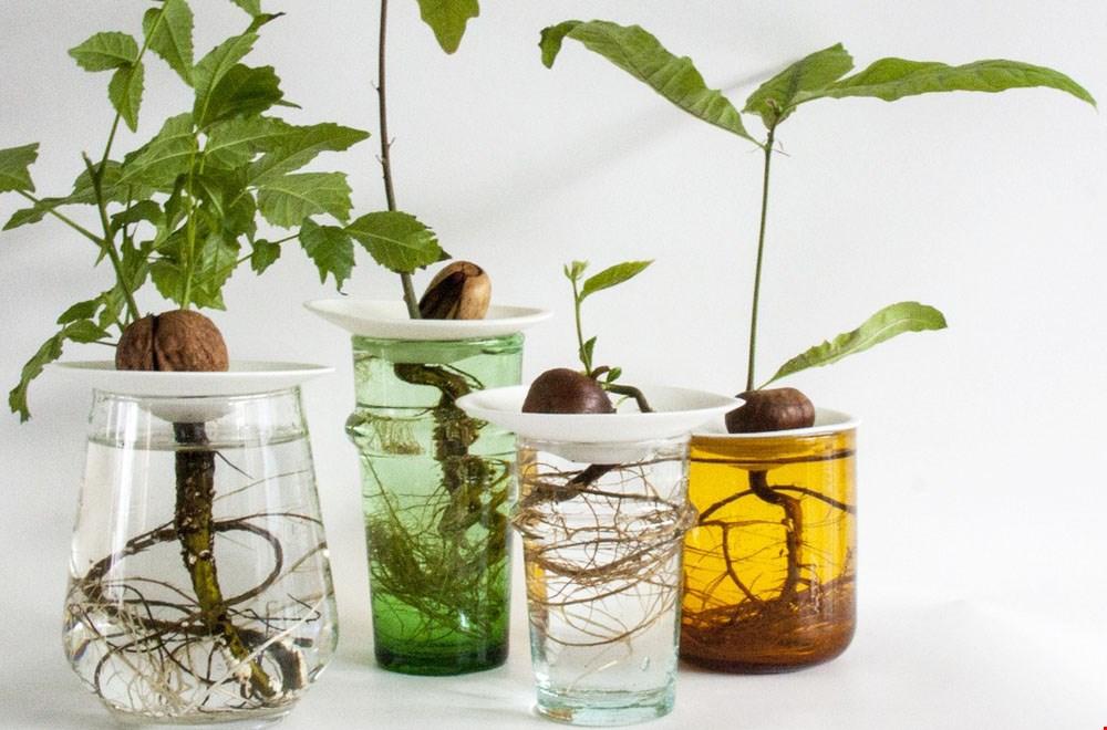 Botanopia set planten Flavourites