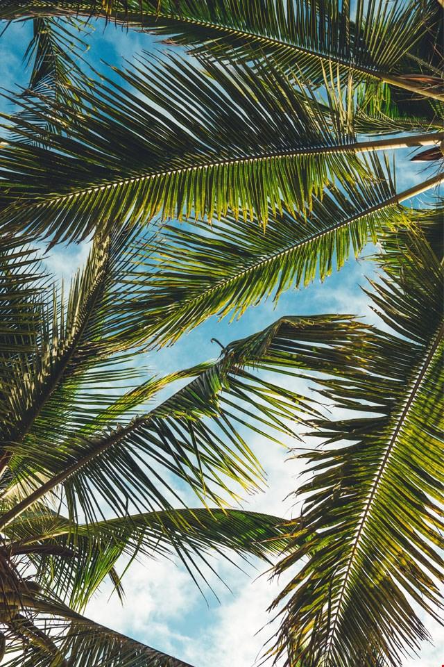 Wallpaper palmbomen