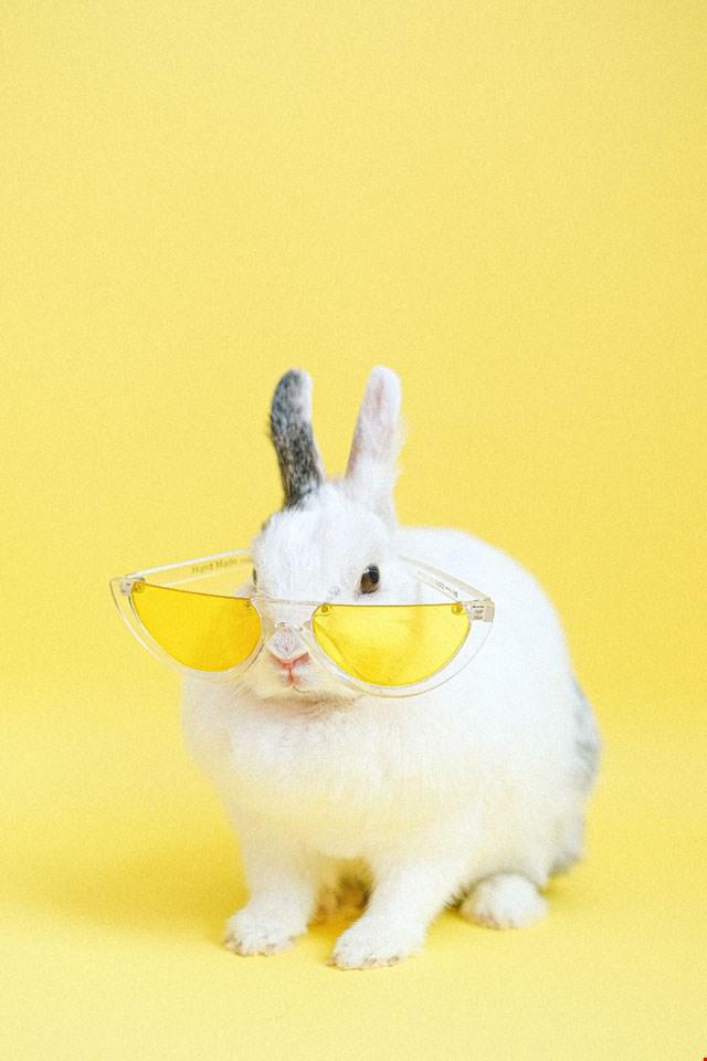 Wallpaper stoer konijntje