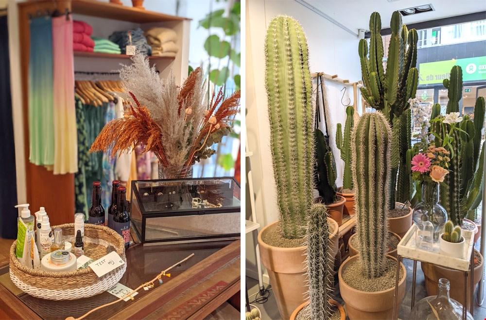 Echt Belgisch (links) en de reuzachtige cactussen van Fleur de Lies (rechts)
