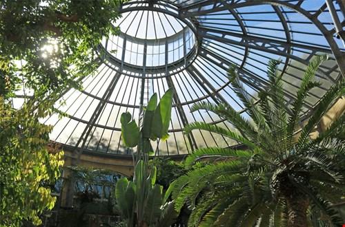 Daguitstapje naar de Hortus Botanicus in Amsterdam