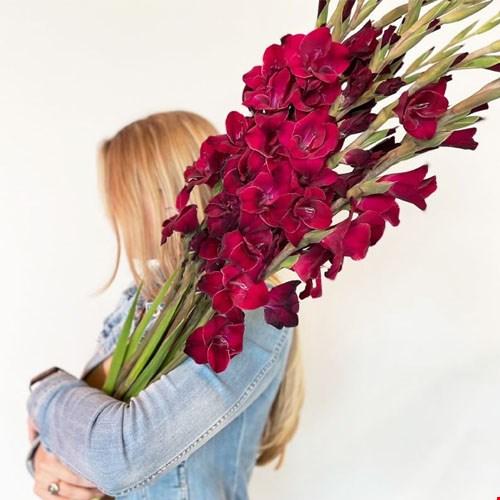 Zomerse Gladiolen