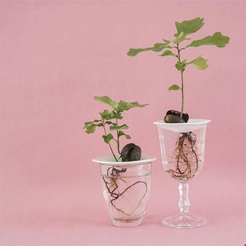 Nous concept store stekken planten Flavourites