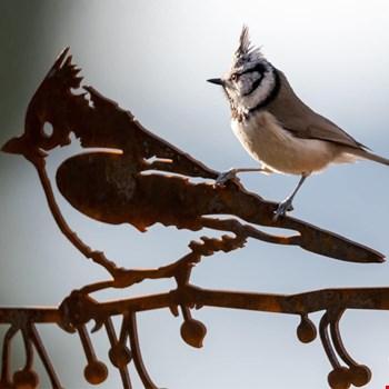 Gratis Metalbird Vleermuis bij bestellingen boven € 35,-