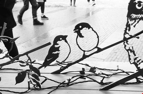 metalbird.nl