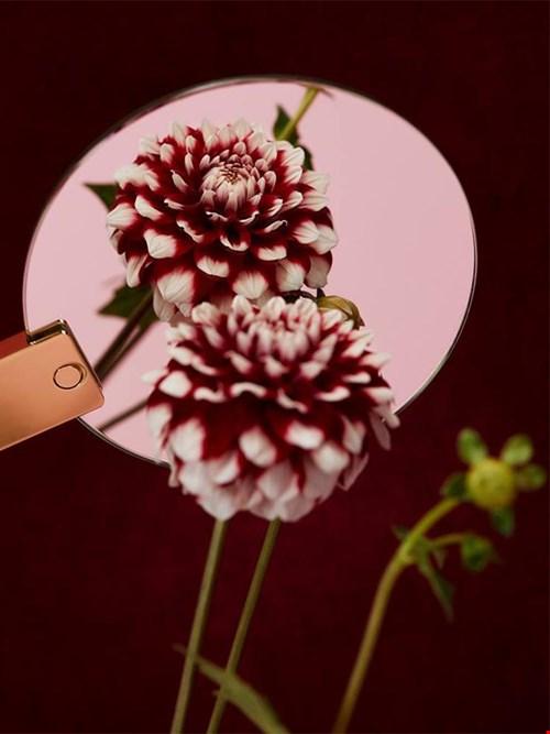 bloomon.nl