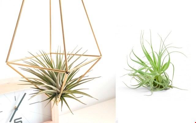 Met deze DIY terrarium creëer je een subtiele eyecatcher voor in huis