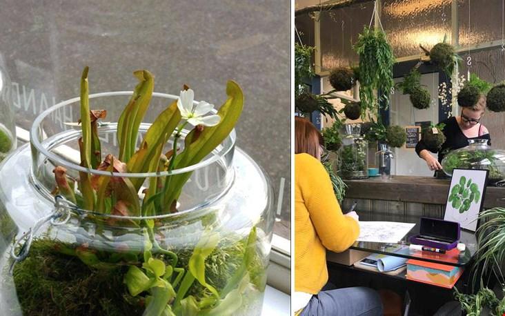 De zussen Miranda & Patricia zullen je doorlopend bezig zien met groen, bij hen kun je je eigen kokedama of terrarium maken.