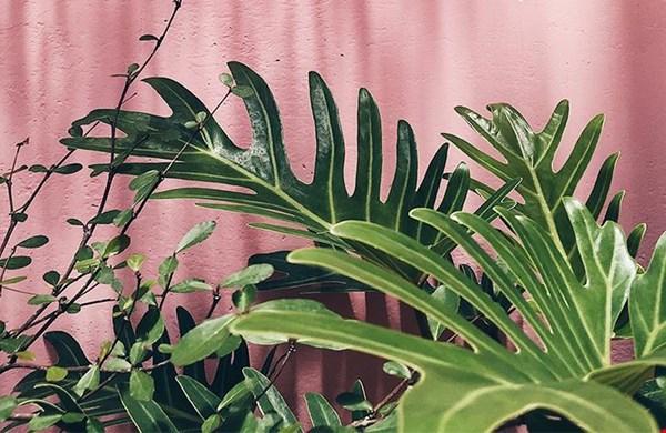 Happy plants