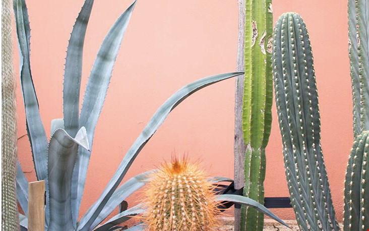 Groene planten op een roze achtergrond... zo mooi!