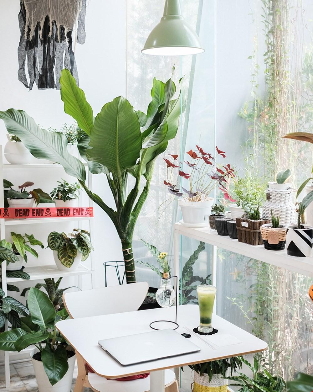 Een groene oase binnen, maar bescherm je planten goed tegen de zon!