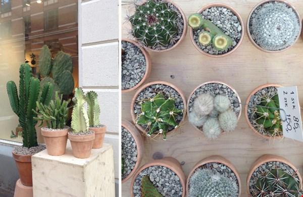 Concept Store Kaktus