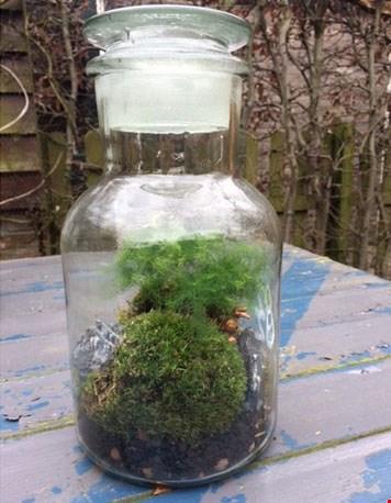 Leuk, zo'n terrarium