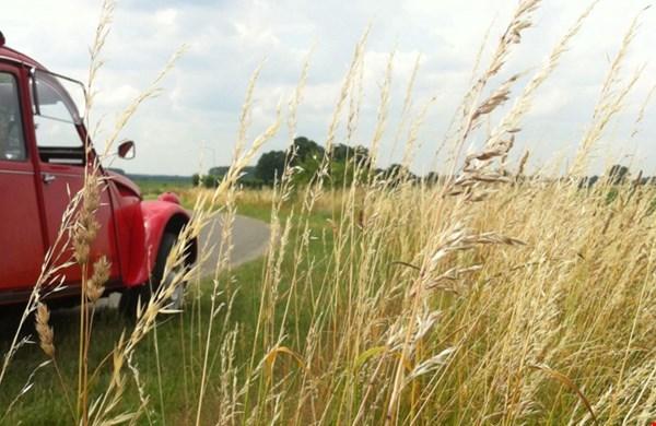 Lelijke eendjes on the road!