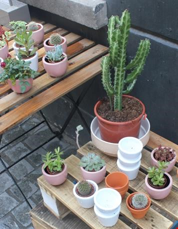 Sfeervolle plantjes buiten bij de winkel