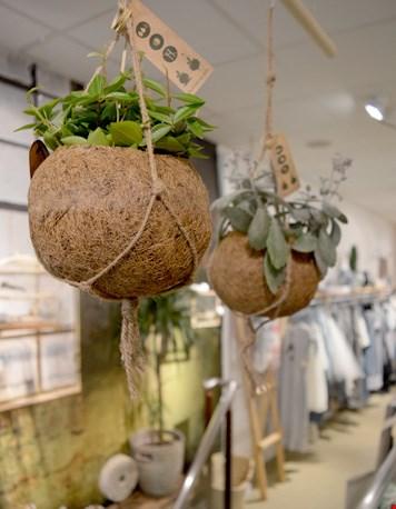 Kokosnoot bakjes uit Sri Lanka