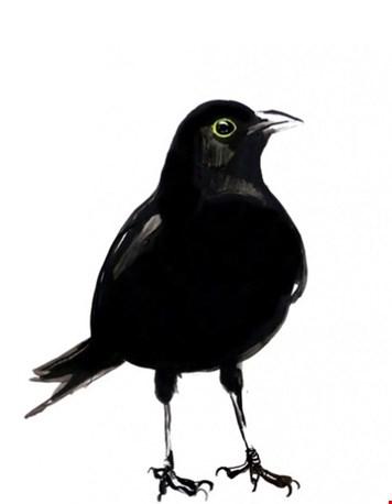 Vogelposters van Maartje van den Noort