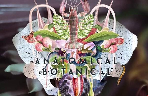 Anatomical Botanical