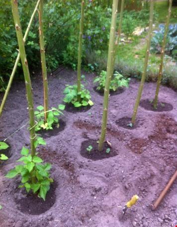 Nog meer planten